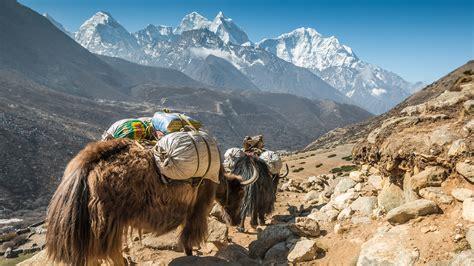 yak  yeti nepal kathmandu hotel greaves india