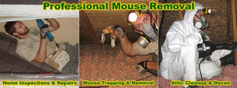 How To Get Rid Of Mice In Ceiling by Mouse Removal And Of Mice