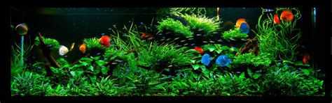 aquarium design group discus another piece of genius from aquarium design group