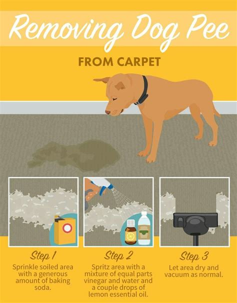boat carpet cleaner homemade 25 unique dog pee ideas on pinterest cleaning dog pee