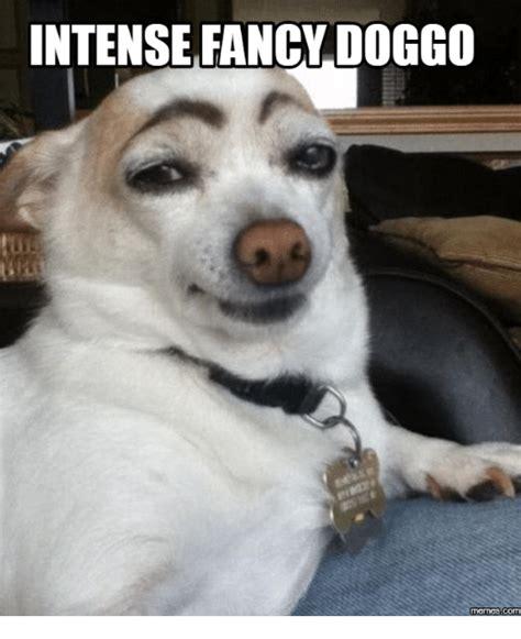 Fancy Dog Meme - intense fancy doggo memes com fancy meme on sizzle