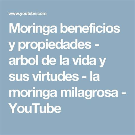video de la planta de moringa youtube 17 mejores ideas sobre 193 rbol de la vida en pinterest