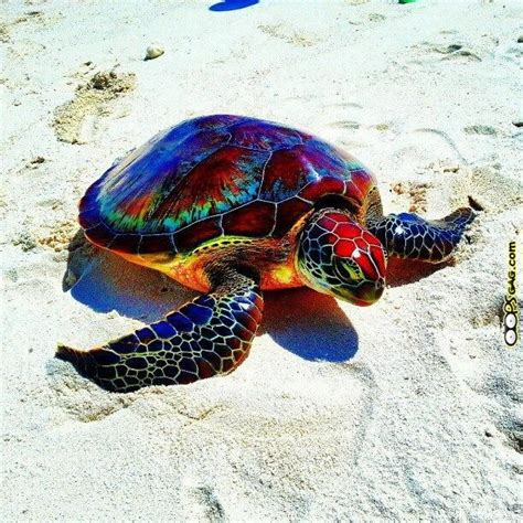 colorful rainbow turtle turtles turtle rainbows and animal