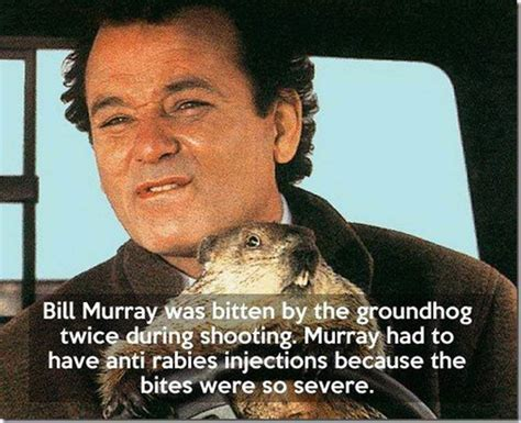 groundhog day bill murray quotes groundhog day memes 4