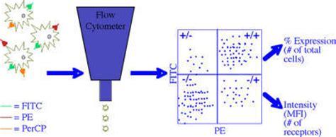 flow cytometry diagram diagram of flow cytometry analysis of proteins expresse