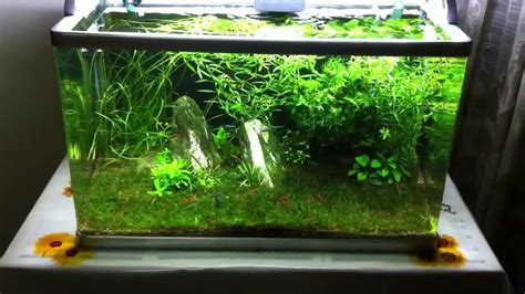 gallon planted tank   green corner youtube