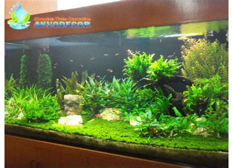 Jual Lu Hias Aquarium jual tanaman hias serpong tanamanbaru