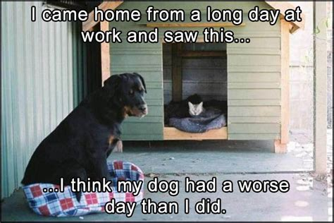 Long Day Memes - funny animal pictures of the day 21 pics daily lol pics