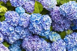 regala fiori fiori da non regalare a chi si ama floraqueen italia