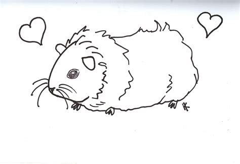 guinea pigs online splash page ginnie pig coloring pages coloring home