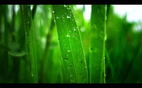green backgrounds pixelstalknet