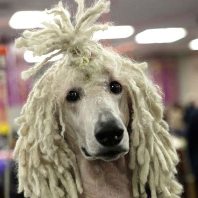 dogs with curly hair if i a with curly hair that pup is going to end up with dreads