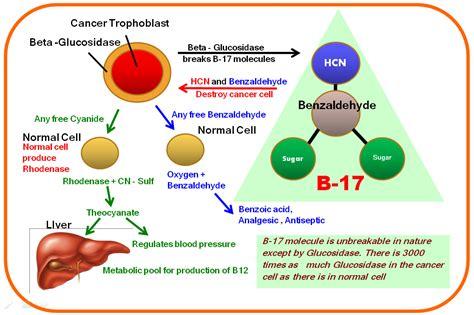 Vitamin B17 vitamin b 17