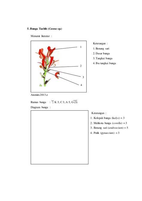 Collection of gambar diagram bunga asoka image collections how to gambar diagram bunga asoka image collections how to gambar diagram bunga tasbih choice image how to ccuart Images