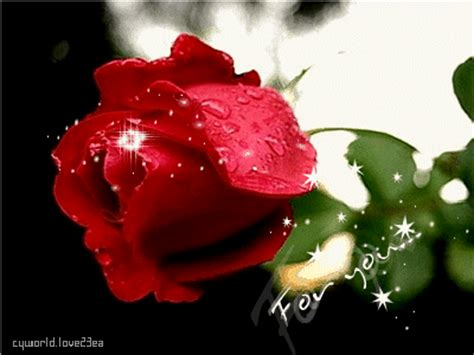 bellas flores amarillas y rojas mandarsaludoscom im 225 genes de rosas con movimiento para mi novio