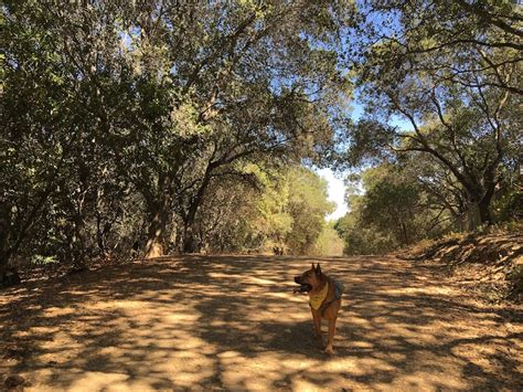 bay area hikes with dogs 7 beautiful friendly hikes in the bay area
