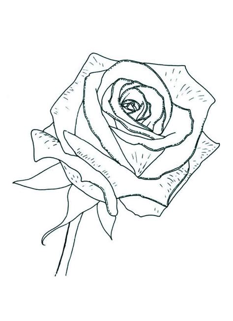 rose coloring page  print  coloring