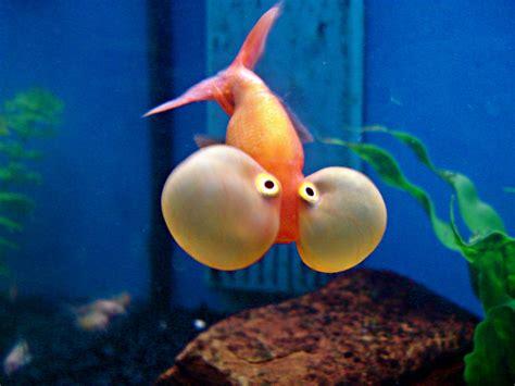 imagenes de uñas tipo pecera los 8 mejores peces para tu acuario vix