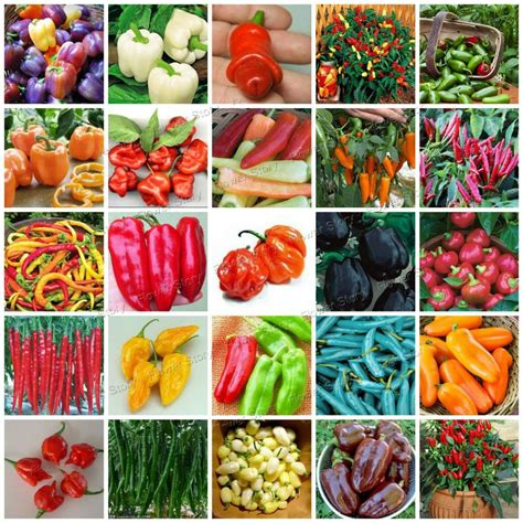 Aliexpress Com Buy 200 Pepper Seeds Fast Growing Diy Popular Garden Vegetables