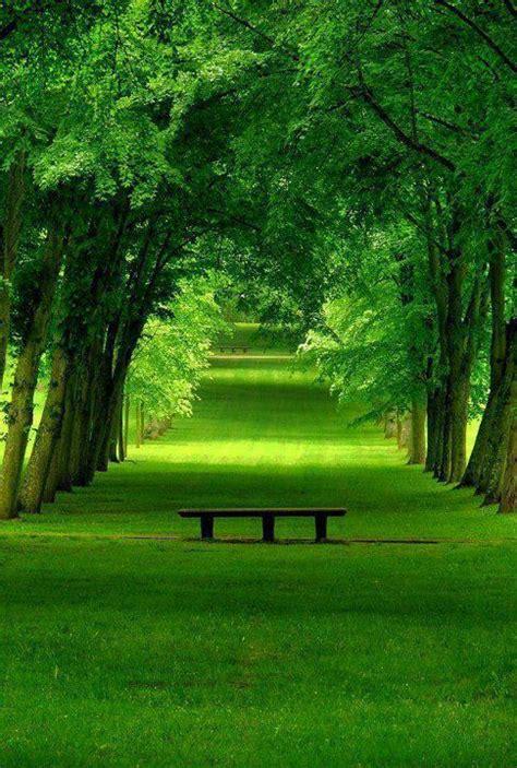 beautiful natural scene wallpaper