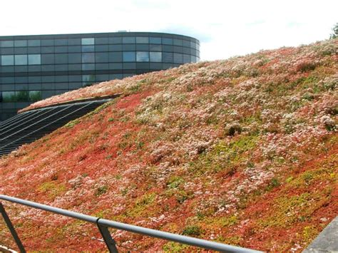 Roof Mats by Buying A Sedum Mat Roof For Outbuildings