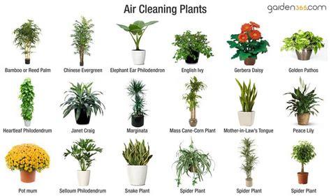 planten  de badkamer en keuken toetiefroetie