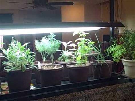 indoor kitchen herb container garden  seedlings growing