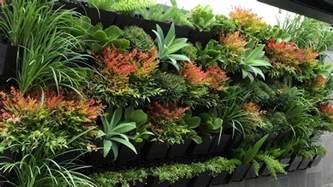 Best Flowers For Garden Top 10 Best Plants For Your Indoor Vertical Garden