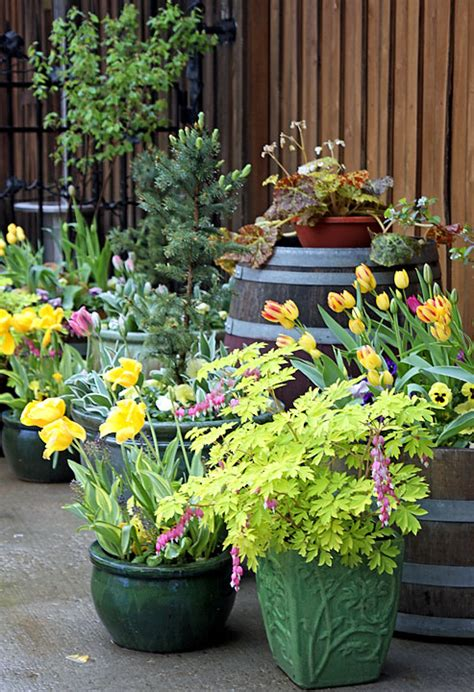 black gold potted gardens create a spring container scape black gold