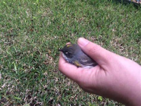 injured bird found at abc13 this morning abc13 com