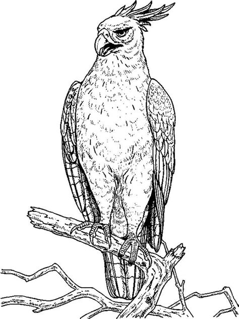 hawk coloring pages atlanta hawks free colouring pages