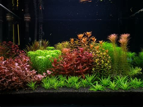 planted aquascape planted tank red and green by adrian nicolae aquascape