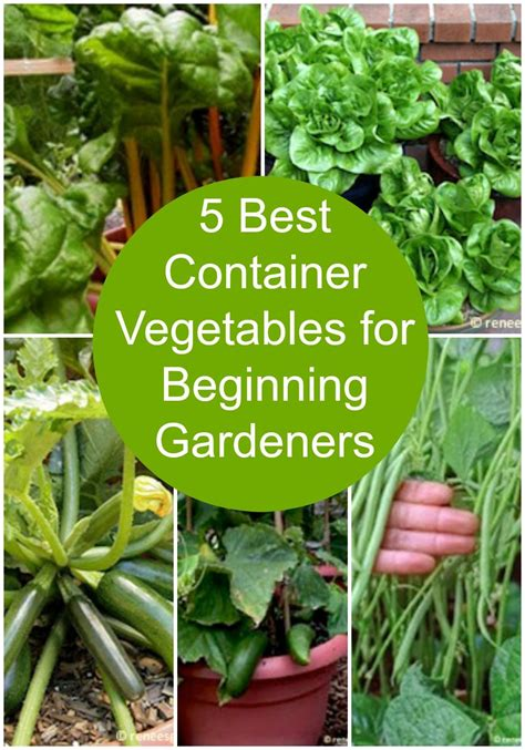 container vegetables  beginning gardeners