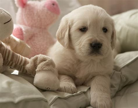 puppy slideshow puppy gallery slideshow