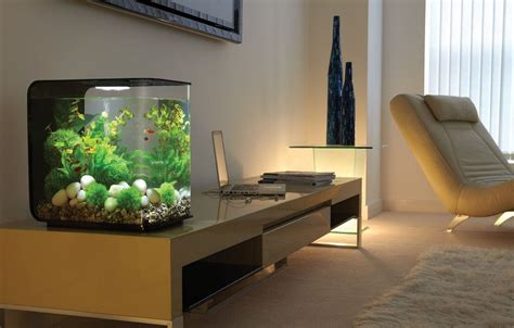 modern aquarium improve your home with modern fish tank