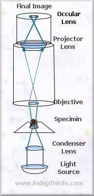 how does a light microscope work compound light microscope how it works bright field