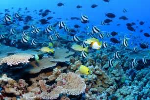 Summer Garden Unawatuna - thinkingaboutchange coral reefs