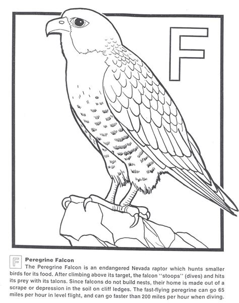 coloring page falcon bird peregrine falcon coloring page how draw falcon punch