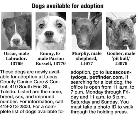 puppies for adoption toledo ohio lucas county dogs for adoption 12 17 the blade