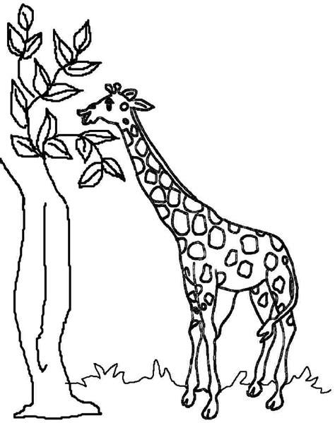giraffe coloring page giraffe coloring pages coloringsuite