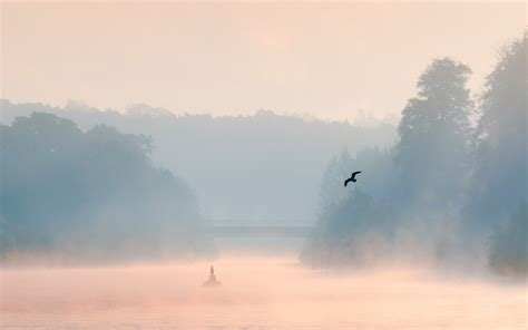morning lake mist bird landscape wallpaper 1920x1200