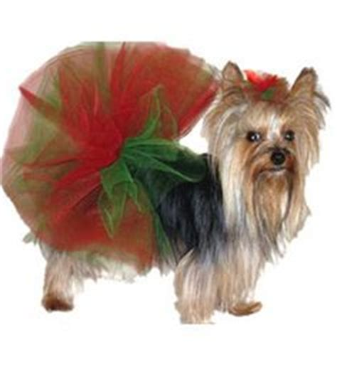 teacup yorkie clothes clothes designer pet fashion louis couture teacup yorkie breeds picture