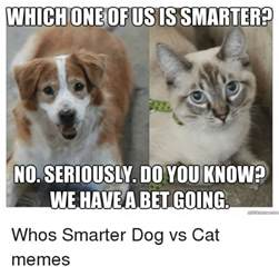 Dog Cat Meme - cat and dog memes pictures to pin on pinterest pinsdaddy