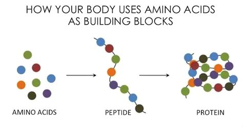 Do You Need Amino Acids To Detox Your by Amino Acids And Proteins All You Need To Juicing