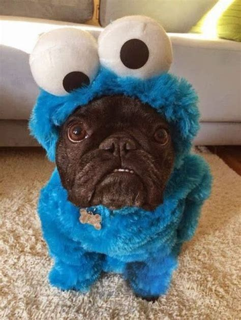 puppies in costumes 25 best ideas about dogs in costumes on puppies in costumes puppy