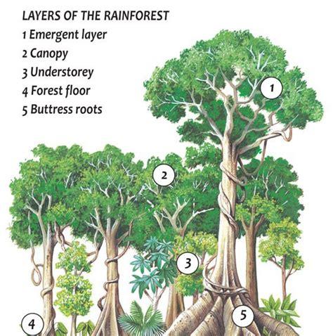 Which Animal Occupies A Rainforest Floor Niche - label rainforest plants gallery