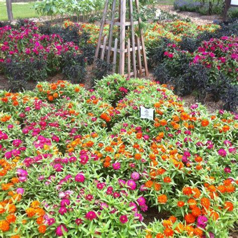 Olive Garden Baton La by 34 Best Images About Lsu Botanic Gardens At Burden On