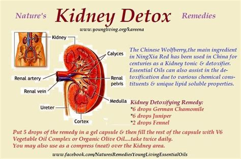 Kidney Detox Remedies by Living Kidney Detox Remedies