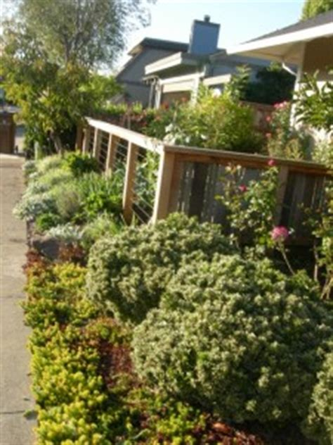 the edible front yard designing an edible front yard edible landscaping made