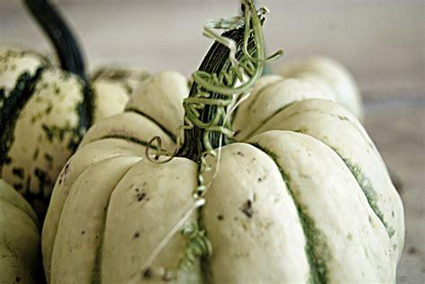 hacks  growing white pumpkins